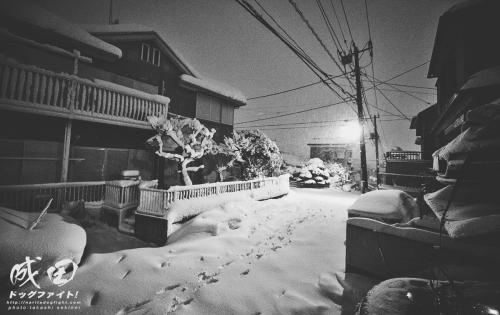 snowfall1